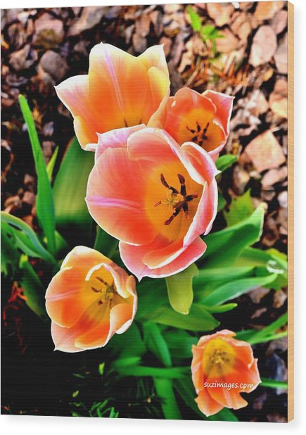 My Mom's Tulips Wood Print
