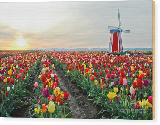 My Touch Of Holland 2 Wood Print