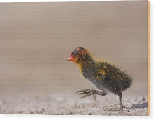 My What Big Feet You Have Wood Print by Ruth Jolly