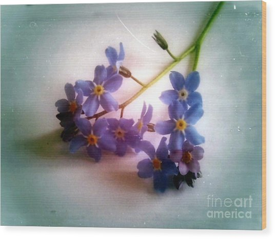 Myosotis  Forget Me Not Wood Print