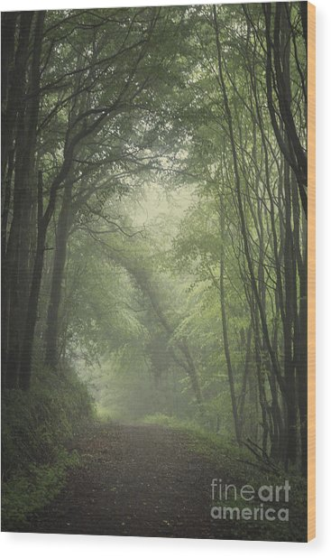 Mystery Awakens Wood Print