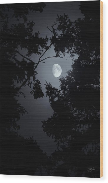 Wood Print featuring the photograph Mystic by Doug Gibbons