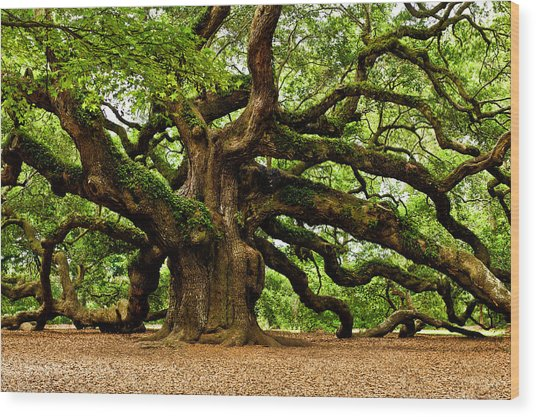Mystical Angel Oak Tree Wood Print