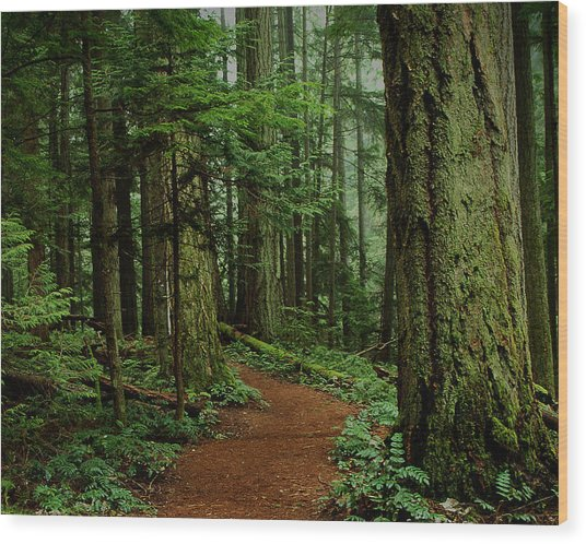 Mystical Path Wood Print