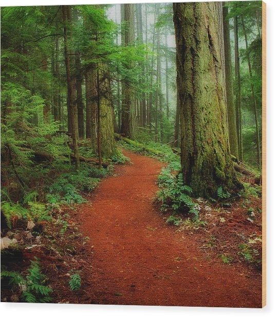 Mystical Trail Wood Print