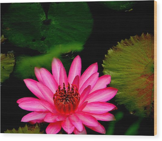 Mystical Water Lilly Wood Print