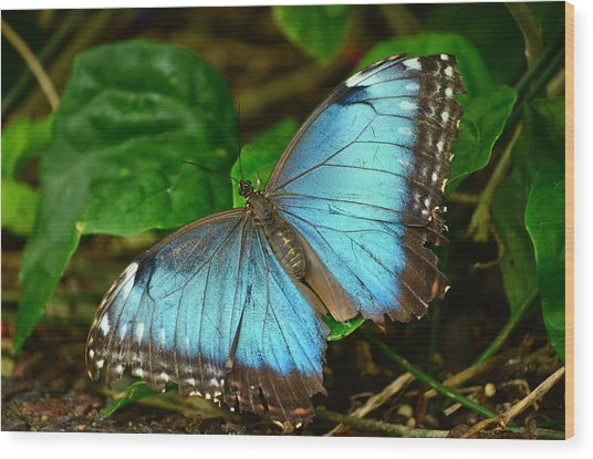 Mystical Wings Wood Print by Fraida Gutovich