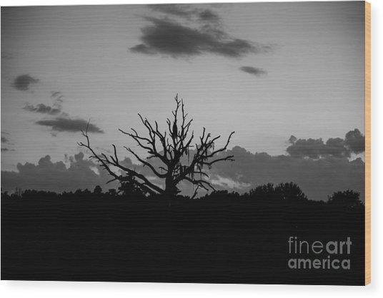 Naked Tree Wood Print by Mina Isaac
