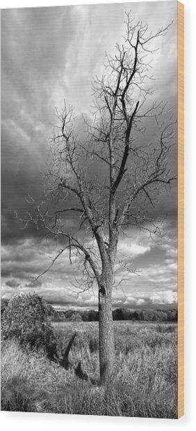 Naked Tree Wood Print by Roger Swieringa