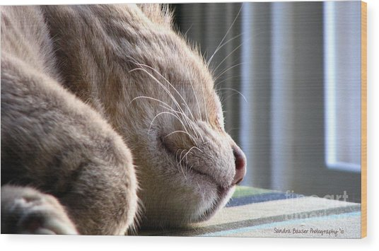 Wood Print featuring the photograph Nap Time by Sandra Bauser Digital Art