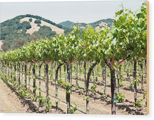 Napa Vineyard Grapes Wood Print