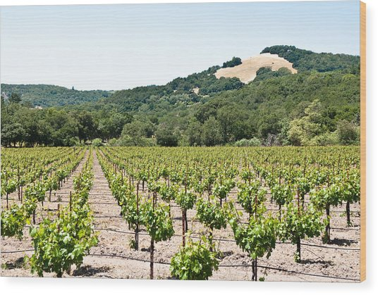 Napa Vineyard With Hills Wood Print