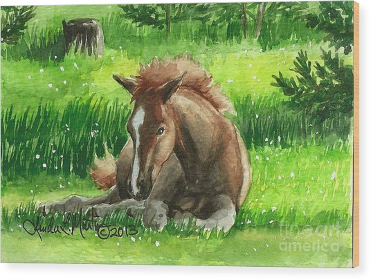 Napping Alberta Wild Foal Wood Print