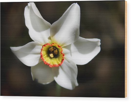 Narcissus I Wood Print by Aya Murrells