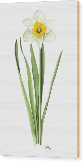 Narcissus Orange Bride Wood Print