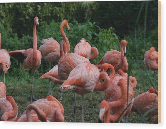 National Zoo - Flamingo - 12123 Wood Print