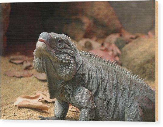 National Zoo - Lizard - 12121 Wood Print