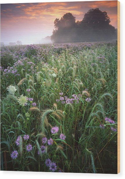 Native Prairie Sunrise Wood Print