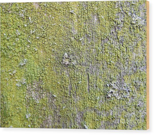 Natural Abstract 1 Old Fence With Moss Wood Print