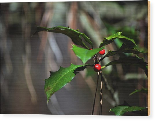 Natural Holly Decor Wood Print by Bill Swartwout Photography