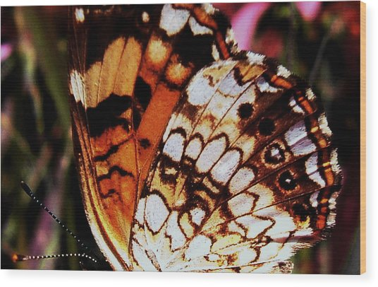 Natures Abstracts Butterfly Wings 005 Wood Print by George Bostian