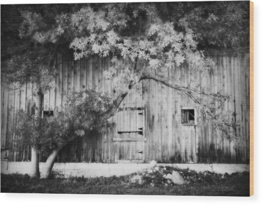 Natures Awning Bw Wood Print