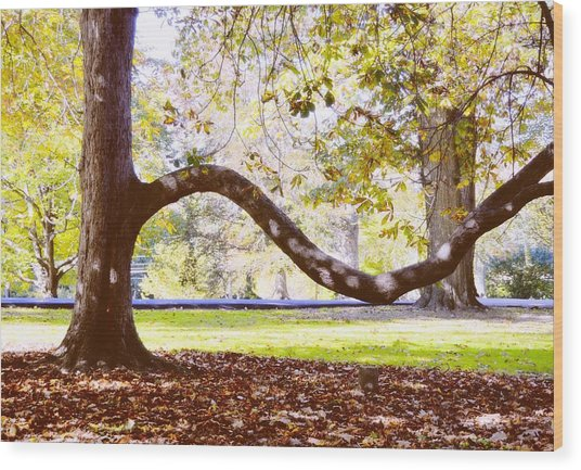 Nature's Bench Wood Print by JAMART Photography