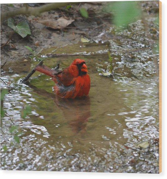 Natures Bird Bath Wood Print by Joe Bledsoe