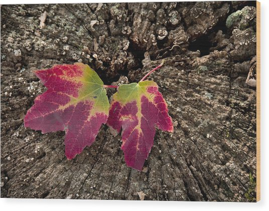 Natures Detail Wood Print by Cindy Rubin