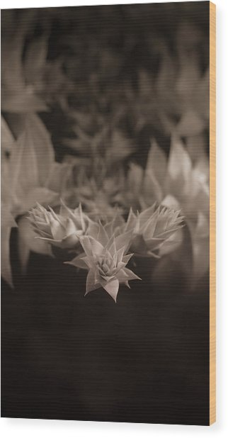 Nature's Directions - Sepia Wood Print