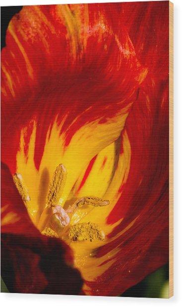 Nature's Flame Wood Print