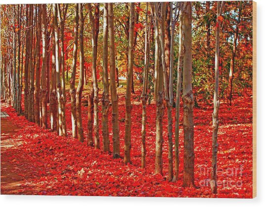 Natures Gifts Wood Print
