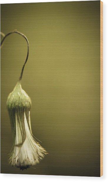 Nature's Little Lamp Wood Print