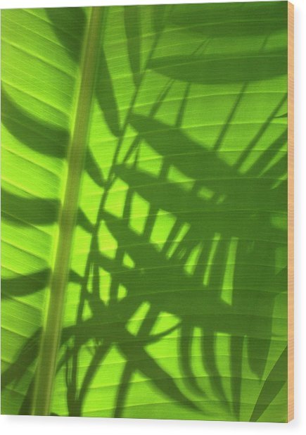 Natures Magic Shadows Of  Palm Fronds Shining Through The Leaf Of A Strelizia Tree Wood Print by PIXELS  XPOSED Ralph A Ledergerber Photography