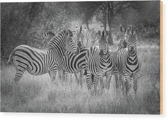 Nature's Referees Wood Print