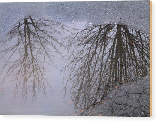 Nature's Reflection  Wood Print