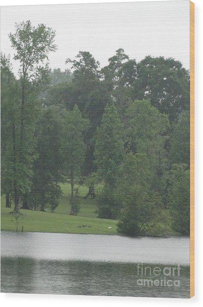 Nature's Serenity Wood Print