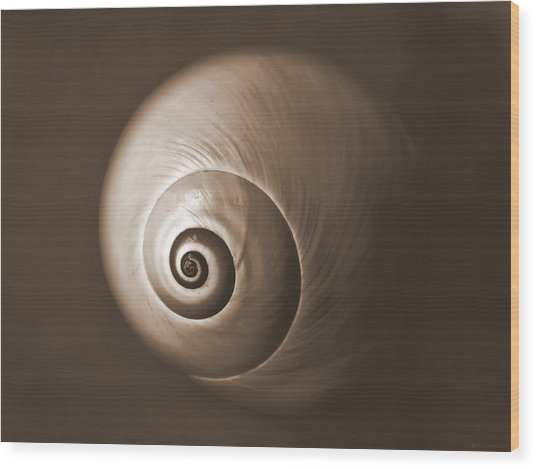 Nautilus In Sepia Wood Print