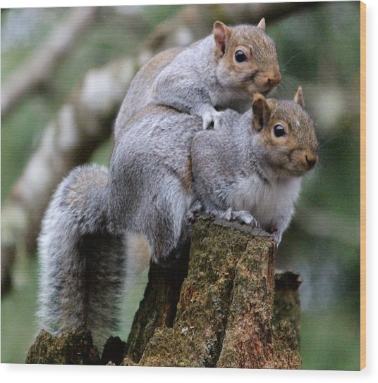 Fifty Shades Of Gray Squirrel Wood Print