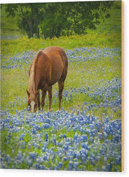 Nelly Grazing Among The Bluebonnets Wood Print