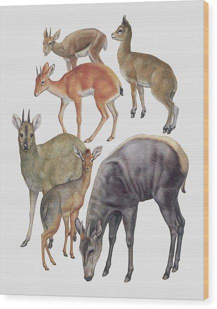 Neotraginae Mammals Wood Print by Deagostini/uig/science Photo Library