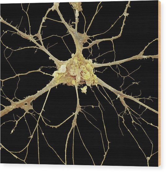 Nerve Cell Wood Print