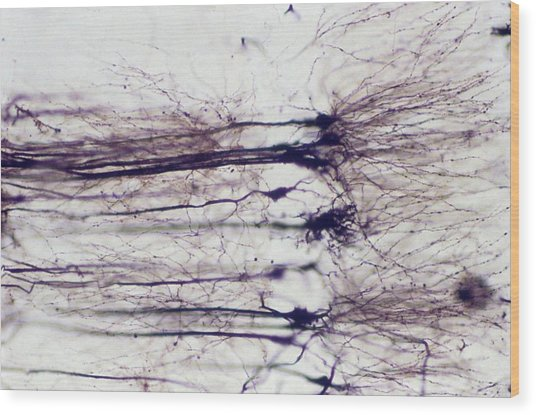 Nerve Cells Wood Print