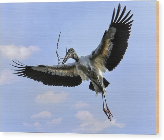 Nest Building Woodstork Wood Print