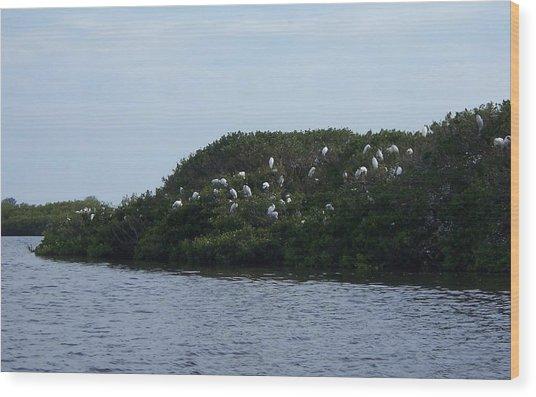 Nesting Storks Wood Print