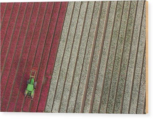 Netherlands, Tractor In Tulip Fields Wood Print by Peter Adams