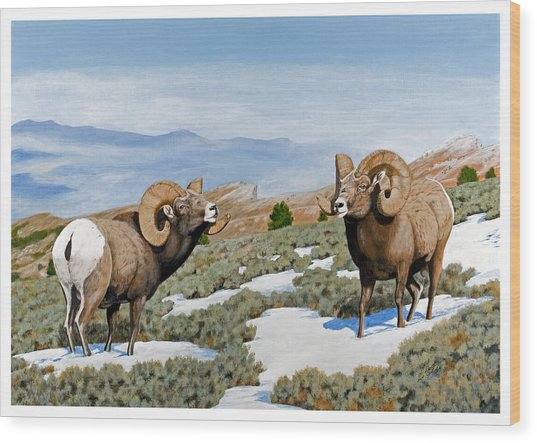 Nevada Rocky Mountain Bighorns Wood Print