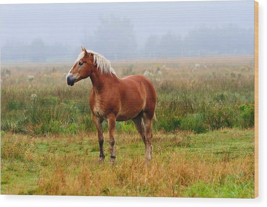 New Brunswick Horse Wood Print