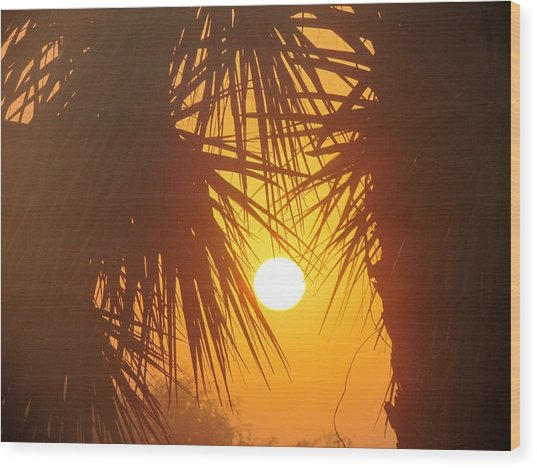 New Day In Paridise Wood Print by Will Boutin Photos