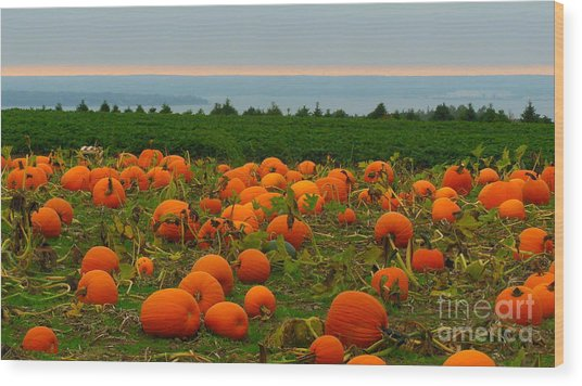 New England Pumpkin Patch Wood Print by Eclectic Captures
